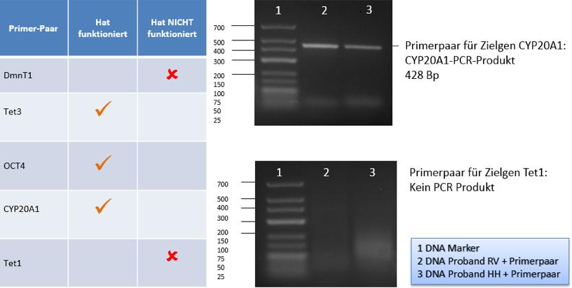 Abbildung 3: BTG Ergebnisse