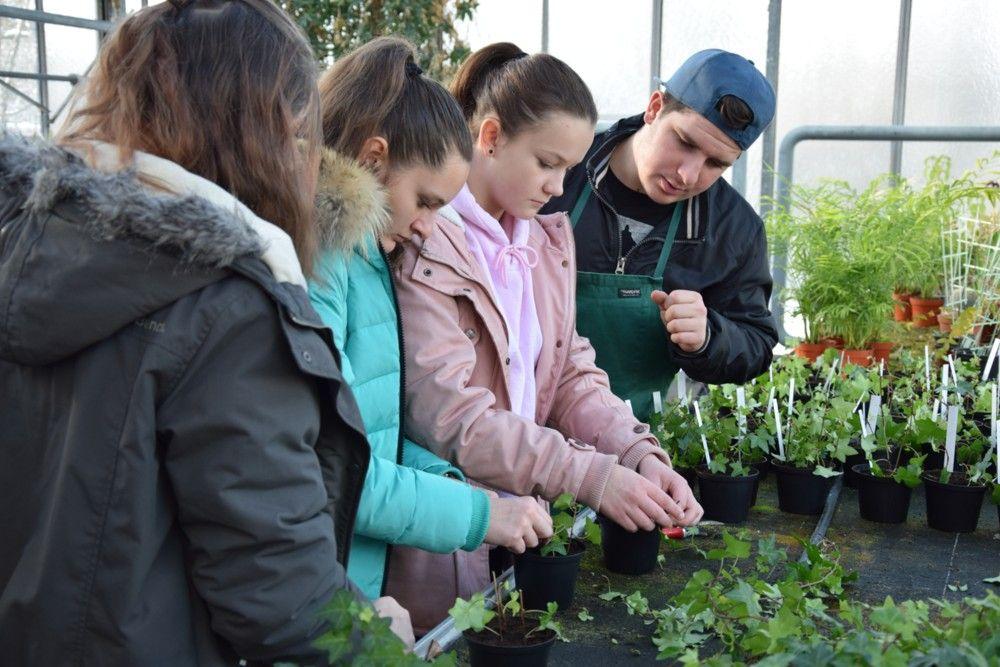 Gartenbaufachwerker (GBF) - Arbeit im Gewächshaus